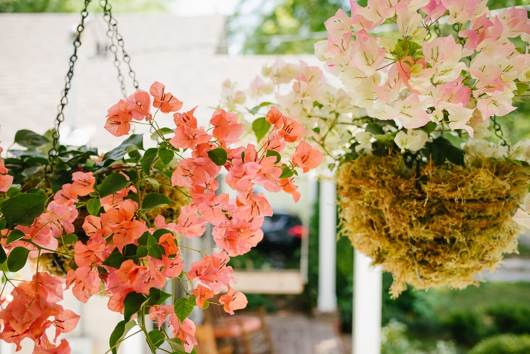 Bougainvillea Hanging Baskets