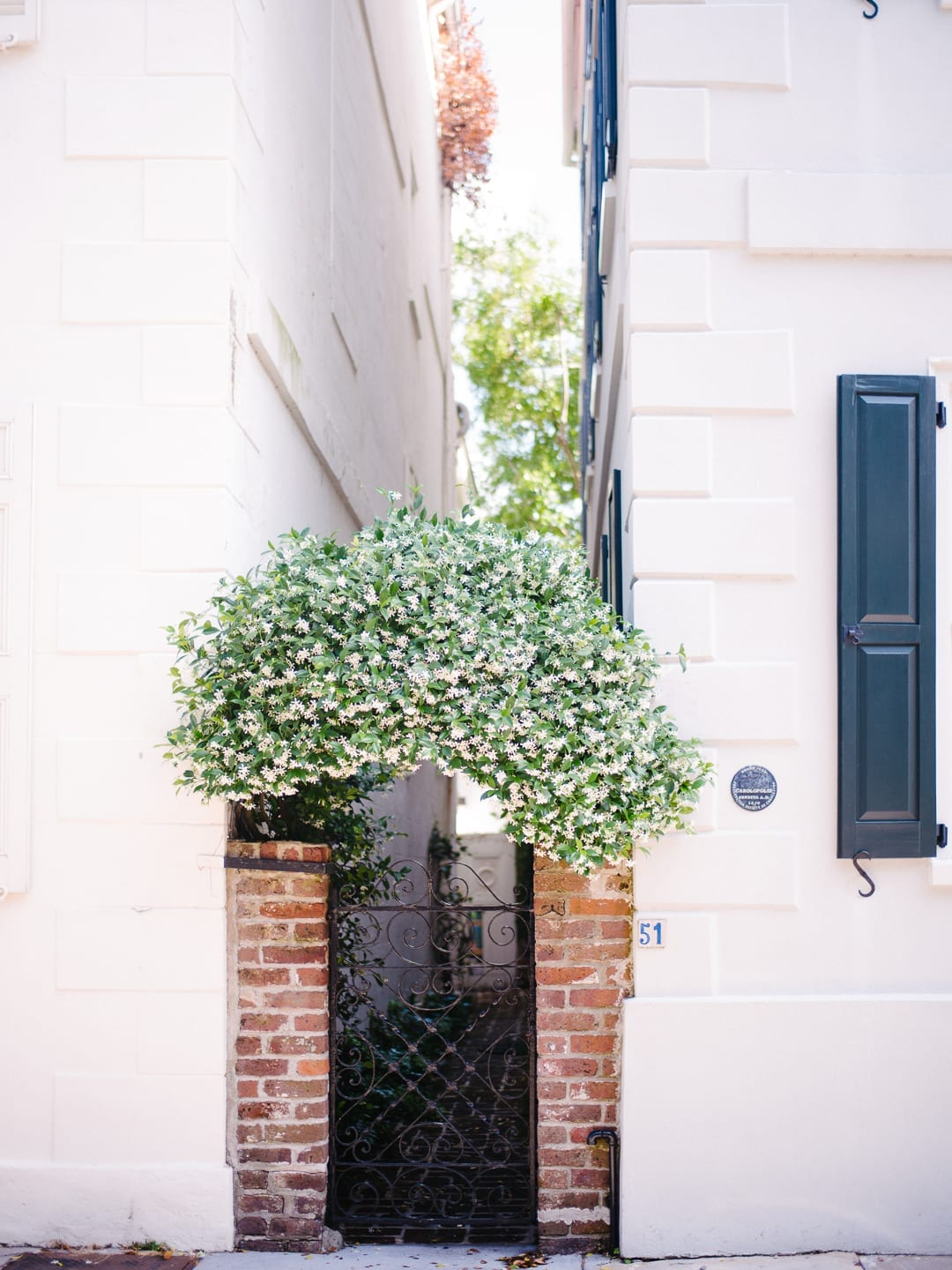 charleston gate covered in jasmine