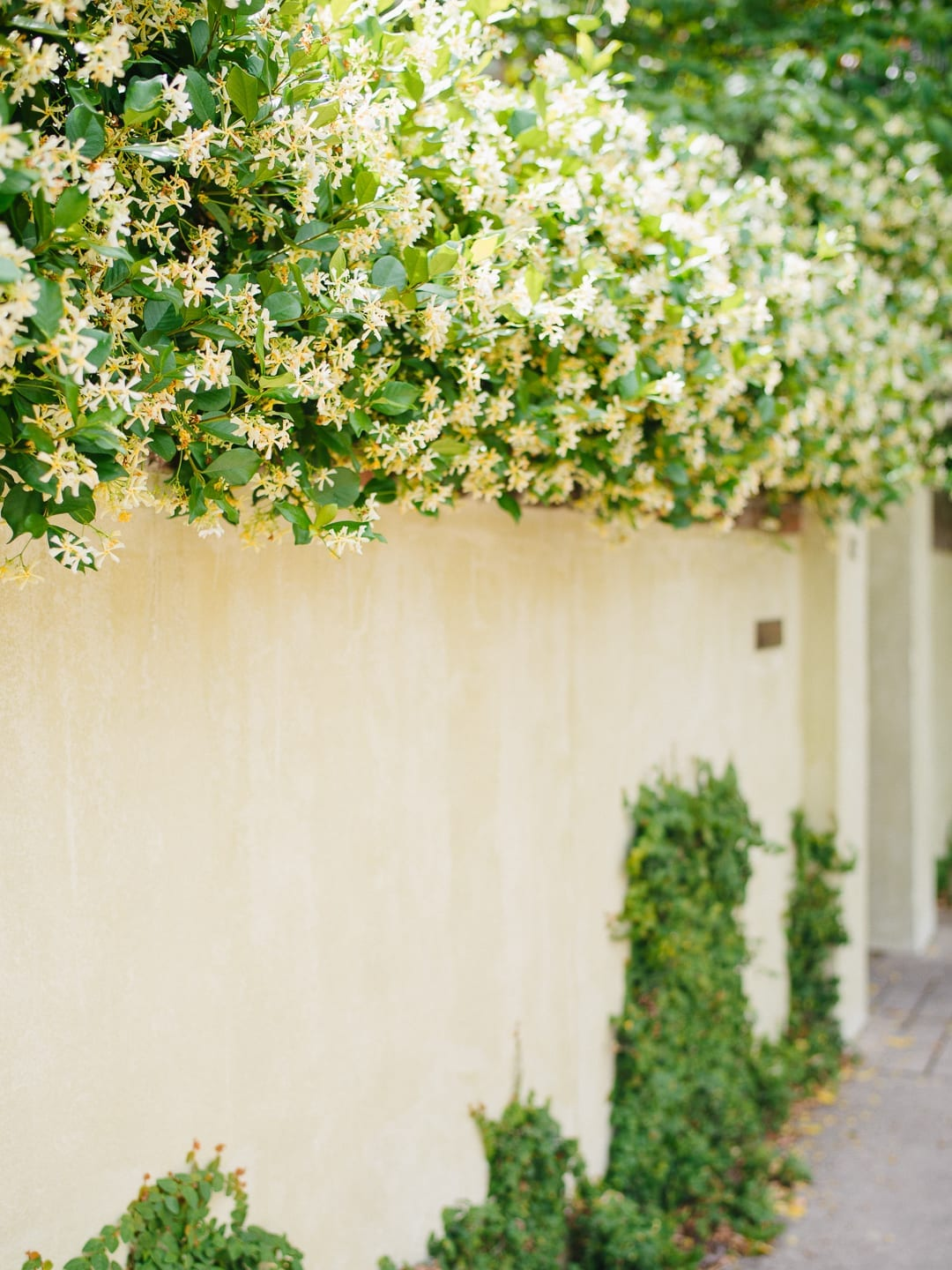 Jasmine Downtown Charleston By Photographer Lucy Cuneo
