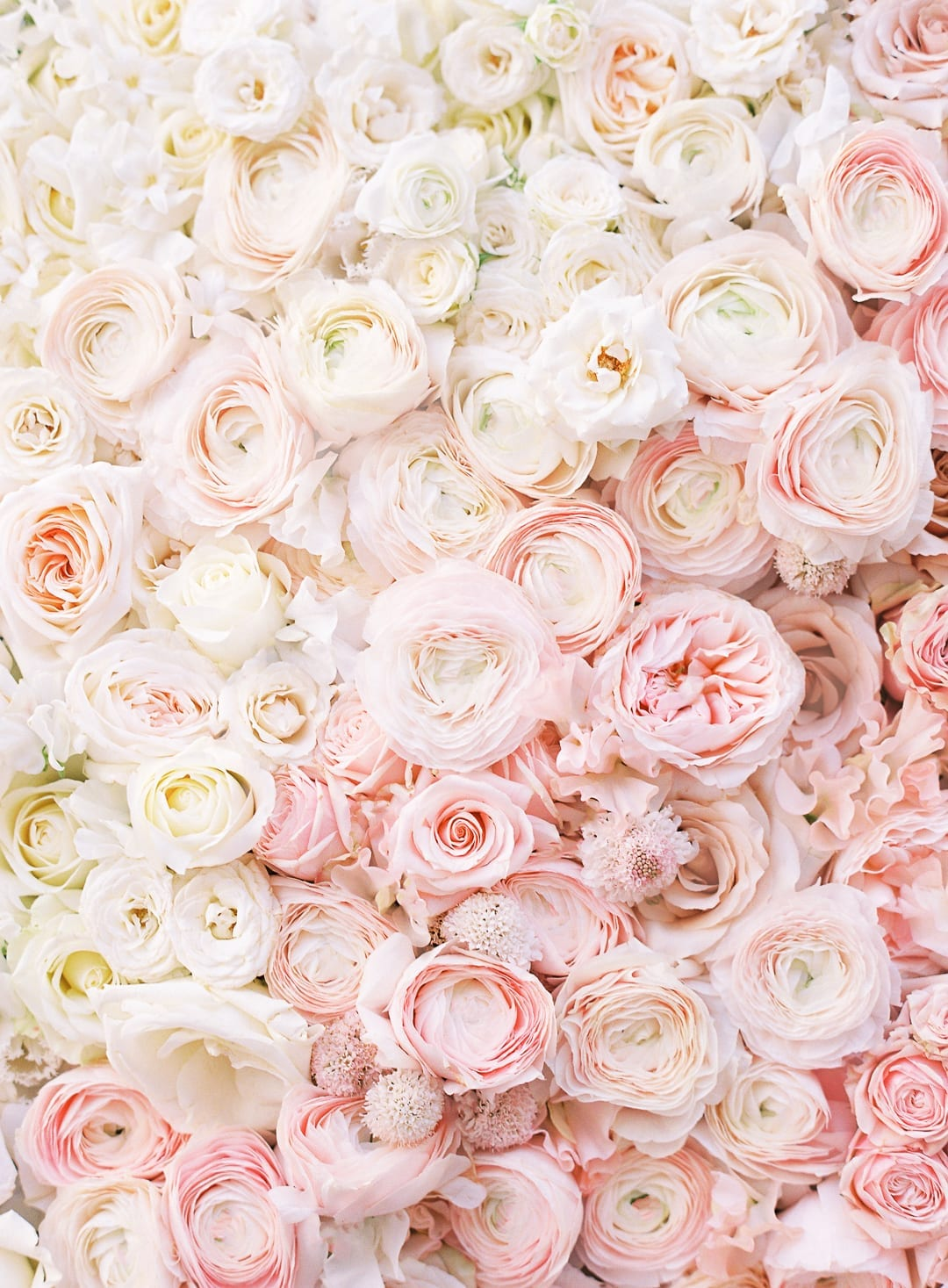 Neutral flower series pink and white tones
