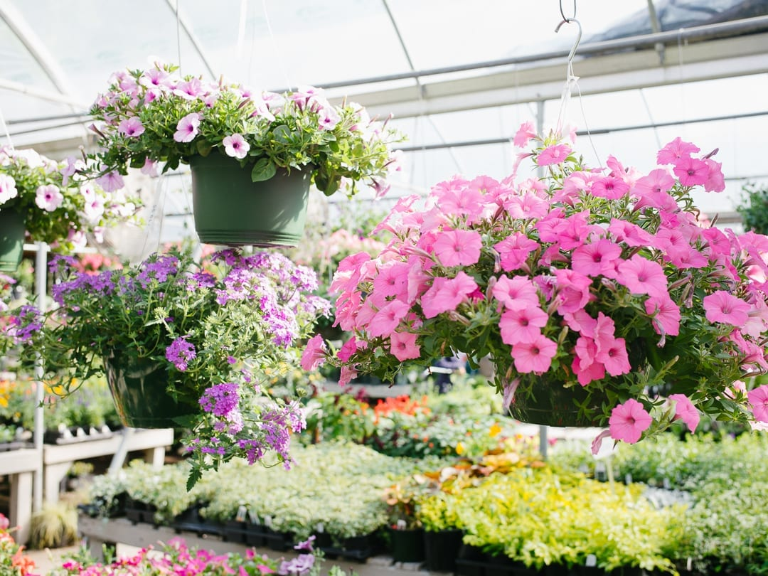 Dreamy Garden Flowers For Spring Planting Project P1