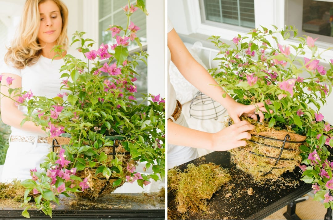 Bougainvillea Hanging Basket Tutorial