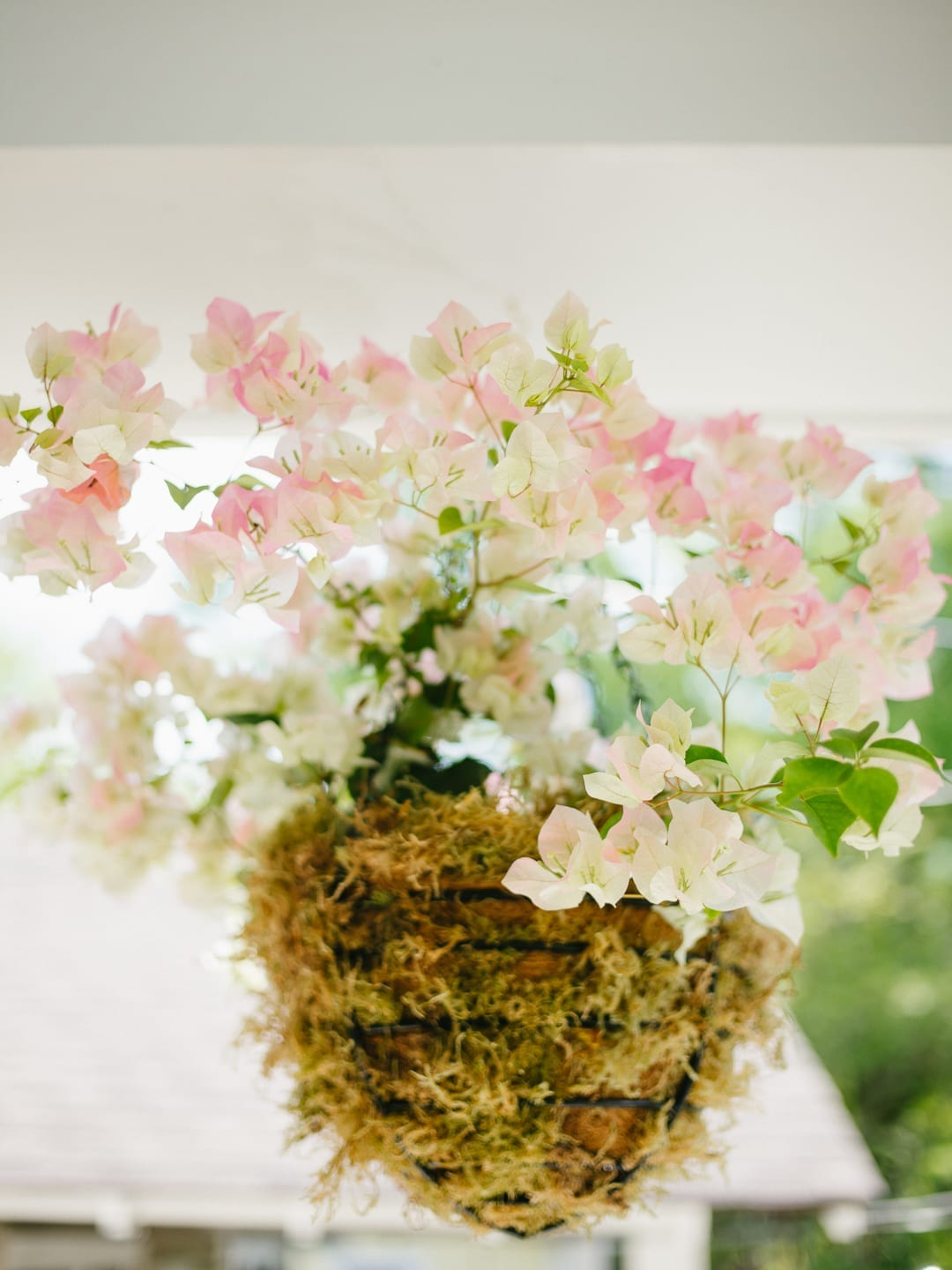 Close Up Of Bougainvillea Hanging Baskets