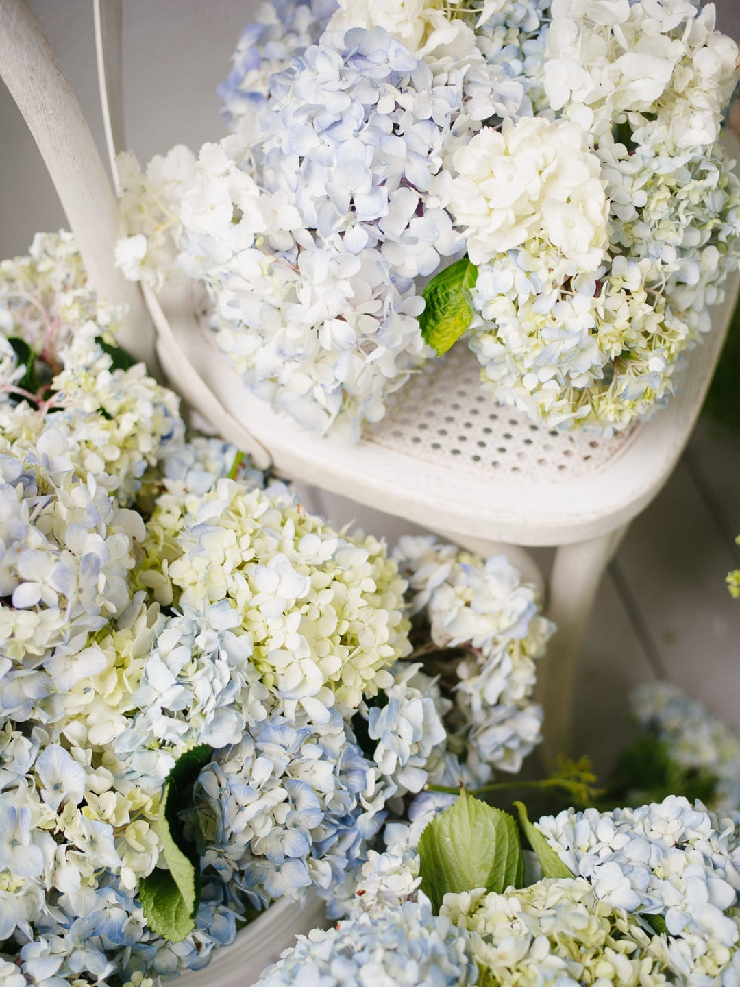 Hydrangeas in blue and white on a chair
