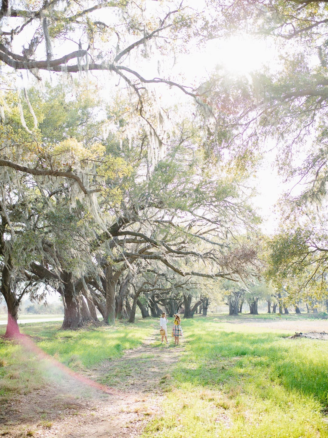live oaks, the south, girls talking, lens flare