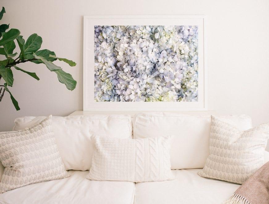Hydrangea Fine Art - Lucy Cuneo Fine Art Flower Photographs