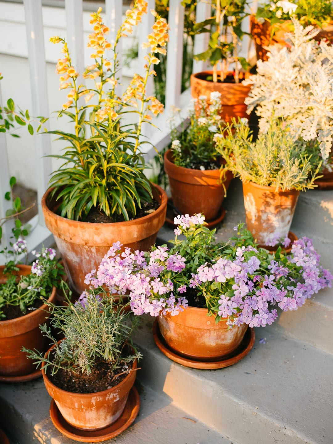 Plant care tips from Lucy Cuneo