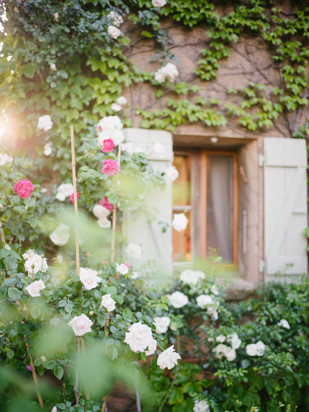 Pink and white roses on a trellis by a window of a French cottage - First Glimpse of France